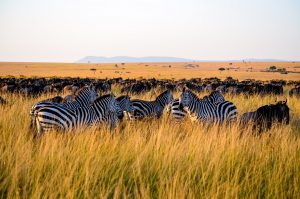 KENIJA-NAIROBI # 14 dni (povratna letalska karta iz Amsterdama) že za €379!